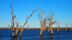 Lake Lonsdale Trees, Grampians, Victoria, Australia (Red Nomad OZ) Tags: grampians lake lakelonsdale victoria australia grampiansnationalpark