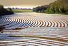 Courbes (JDAMI) Tags: maïs plantations semis forçage lignes courbes champ somme picardie 80 france nature arbres éolienne village nikon d600 tamron 2470 ciel herleville
