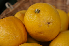 When life gives you a basket of lemons... (jfingas) Tags: ottawa canada spring byward market lemon lemons fruit