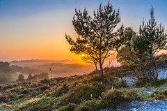A Road Runs Through It (nicklucas2) Tags: newforest rockfordcommon mist bracken tree sunrise sun road