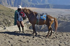 "INDONESIA, Java, people and horses in the caldera (sandy sea) At the Tengger volcano massif (Bromo) 17456/10017 (roba66) Tags: urlaub reisen travel explore voyages visit tourism roba66 asien asia inselstaat java ostjava bromo vulkan volcano ""gunungbromo"" stratovulkan tenggermassiv"" nationalpark ""semerumassif"" caldera sandmeer krater crater mountain berge range naturalezza mountains montana felsen rock rocks landschaft landscape paisaje nature natur people leute menschen tier tiere animal animals creature pferd horse cheval chevaux caballo trabalho"