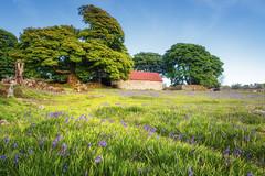 Emsworthy Barn (Rich Walker75) Tags: dartmoor devon landscape landscapes landscapephotography landmark landmarks grass field bluebells flowers barn structure building buildings tree trees canon england efs1585mmisusm eos eos80d