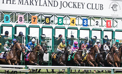 2018 Pimlico Race track (74) (maskirovka77) Tags: pimlico dirt mare race racehorse threeyearold turf yearling