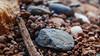 C 4.2 (Madalyn Vega) Tags: sticks stick stones stone pebble rock monochromatic brown red black grey texture rough bumpy smooth slick 10 small smallrocks rocks cropped edited lightroom