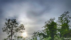 skyland (Massimo Vitellino) Tags: sun clouds skyland sky outdoors hdr colors nature trees abstract contrast conceptual lights shadows noperson perspective