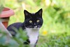 Deep Thought....... (law_keven) Tags: cat cats animals catford london england gardens