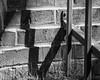 IMGP2162 (agianelo) Tags: metal tube gate brick shadow grass monochrome bw blackandwhite