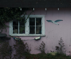 pink (dotintime) Tags: pink cottage house small sweet quiet marine beach seagull eaves window dotintime meganlane