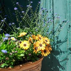 Flowers (masamitony) Tags: flowers summer hasselblad