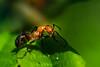 Bonjour :) (Koberek@) Tags: sulików koberek sony slt 37 outdoor wild wald wiosna poland polska przyroda macro makro tamron 90 dolnyśląsk landscape lower silesia light