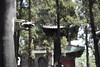 Shaolin Temple, Henan Province, China (Richard Wintle) Tags: shaolin temple monk monastery monks kungfu buddhist dragon henan henanprovince dengfengcounty dengfeng china