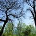 Dipinti della natura in Burcina (guardare in Large premere L)