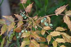 DSC08313 (SnowM28) Tags: kanagawa yamato blue green brown sony a5000