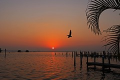 What You're Looking For (Michiale Schneider) Tags: sunset water pier birds pelicans palmfrond silhouette landscape pinelandflorida michialeschneiderphotography