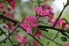 IMG_2221 (Joan van der Wereld) Tags: spring nature flowers blossoms blossoming tree pink green twig