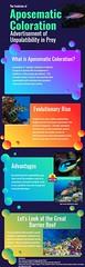 Hannah Infanti Infograph (hannahinf) Tags: aposematic coloration hannah infanti infograph