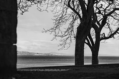 Lauriston and Crammond with Alastair April 2018 (93 of 126) (Philip Gillespie) Tags: crammond lauriston castle keep gardens park green blue red yellow orange colour color mono monochrome black white sea seascape landscape sky clouds drama dramatic walkway path flowers leaves trees april spring defences canon 5dsr people rust metal grafitti man dog petals bluebells dafodils holly blossom pond forth water wet rain sun reflections architecture mirrors gold japan garden sunlight scotland