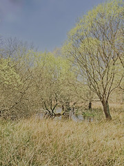 BrownseaIslandNo22 - Copy (iankellybn26dj) Tags: dorset england landscape photo spring trees natural