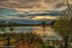 RCP evening (martin.baskill) Tags: lake water reeds sky landscape fence calm peaceful green gold blue tree