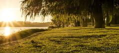 Magic Sunrise (matt_sekuloff) Tags: beauty bellaeza grass pasto green verde amarillo yellow arbol tree sun sol lake lago agua water glare brillo morning amanecer sunrise manana perth western australia naturaleza nature