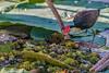 DSC_7743.jpg (David Hamments) Tags: nationalpark combcrestedjacana cooinda kakadu yellowwaterscruise northernterritory bird billabong