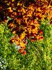 DSC05472 (gordonplant) Tags: monmouth wales unitedkingdom gb