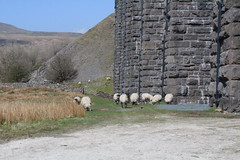 IMG_8879 (Lady Science) Tags: ribblehead ribbleheadviaduct northyorkshire