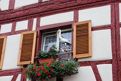 Vacances_0462 (Joanbrebo) Tags: eguisheim grandest francia fr alsace hautrhin canoneos80d eosd autofocus efs1855mmf3556isstm window ventana finestra