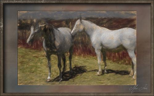 Puttelange 2018 05 - 028 lrTpz1 hd chevaux
