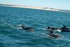 Bottlenose Dolphin (zenseas) Tags: africa algoabay fun wild southafrica bottlenosedolphin southernhemisphere indianocean portelizabeth indopacificbottlenosedolphins easterncape tursiopsaduncus sun sunny boat boating