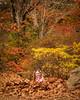 Getting in Amongst it (Eddy Summers) Tags: dfa100mm28 dfa100 pentaxk1 pentax pentaxaustralia k1captures landscape australia autumn vibrant saturated colourful everglades bluemountains leura