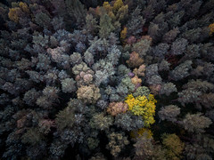 Spotlight II (Draws_With_Light) Tags: vegetation aerialphotography landscape djiphantom3advanced woods abstract allerthorpewood woodland scene drone fern eastridingofyorkshire camera autumn season allerthorpecommon places tree