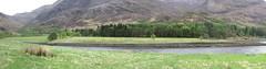Rhapsody in green - Loch Leven (Andy - Busy Bob) Tags: 5picstitch ccc conifer ddd deciduous ggg greens lake lll lochleven sealoch seawater sss tidal trees ttt water www holsday04