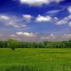 Field of May, Angers (pom.angers) Tags: panasonicdmctz101 europeanunion may 2018 empiré saintegemmessurloire angersloiremétropole 49 maineetloire paysdelaloire france field flowers trees sky blue green angers 100 200 300