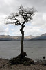 The Lonely Tree at Loch Lomond, SCotland (Sandra L Ekins) Tags: thelonelytree lochlomond scotland water mountainside trossachspark millarochybay