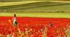 CAMPO DE AMAPOLAS (JuanCarlossony) Tags: amapolas niño mujer rojo flores pelirrojo pradera juego cultivo sembrado sony slta58 a58 70300mm tamron fieldsofpoppies poppies