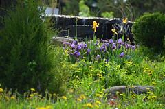 (UWW University Housing) Tags: plants flowers leaves spring 2018 uww uwwhitewater uwwcampus campusbeauty floral