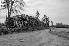 Timber (AstridWestvang) Tags: brunlanes industry larvik people road timber trees