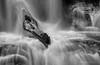 River Dragon (Marsha Kirschbaum) Tags: log sonyarii landscape waterfall water blackwhite wet ©marshakirschbaum glenalpinefalls rushingstrongcurrent dragon horse