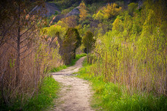 Path at Bluffers Park (A Great Capture) Tags: nature path blufferspark buffs scarborough toronto agreatcapture agc wwwagreatcapturecom adjm ash2276 ashleylduffus ald mobilejay jamesmitchell on ontario canada canadian photographer northamerica torontoexplore spring springtime printemps 2018