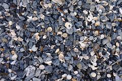 Confetti, Billys Beach (335semi) Tags: australia nsw nationalpark national park eurobodalla billysbeach billys beach rocks rockforms shells stones fuji fujixt2 corunna mysterybay