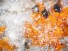 Buried in Ice - 2018 (weatherburyroy) Tags: serenagundyparkwinter ice