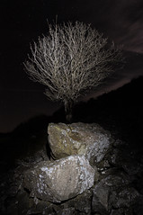 Illuminated (DAWPhotog) Tags: tree trees rock rocks light lightpainting painting night nightphotography nightsky darksky sky stars astro astronomy astrology astrophotography mood drama dark shadows moon exploration adventure hike hiking walking travel roadtrip england europe shropshire national park landscape nightscape