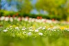 walk in the Park (icemanphotos) Tags: spring flowers bokeh blur happy calm nature