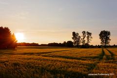 Landschaft in Sturm und Abendsonne (grafenhans) Tags: sony rx100 rx 100 carl zeiss cz carlzeiss feld abendsonne abendhimmel abendlicht schermbeck gahlen nrw natur schatten