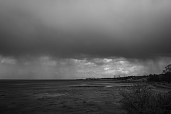 Lauriston and Crammond with Alastair April 2018 (67 of 126) (Philip Gillespie) Tags: crammond lauriston castle keep gardens park green blue red yellow orange colour color mono monochrome black white sea seascape landscape sky clouds drama dramatic walkway path flowers leaves trees april spring defences canon 5dsr people rust metal grafitti man dog petals bluebells dafodils holly blossom pond forth water wet rain sun reflections architecture mirrors gold japan garden sunlight scotland