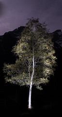 Baum (Klemens Baumgartner) Tags: art alpen artist aa awesome natur nn nikon night nature nikor nm mm gstaad gd gsteig glacier3000 glacier river ruderboot eis world