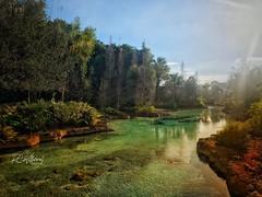 Disney Springs (RosarioCano de Villarreal) Tags: florida orlando sunnyday landscape paisaje vacation disney river