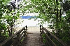 Bridge to the beach (briannalhendricks) Tags: canonrebelt6 canonrebel canon forest pnw beach pathway bridge