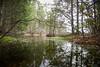 wellsmills (primemundo) Tags: reflections wellsmills cedars moss pond